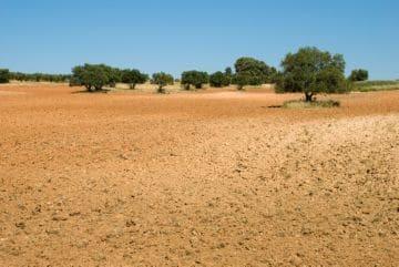 Особенности пожизненного наследуемого владения земельным участком